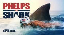 펠프스 vs 상어, 위대한 대결의 승자는?