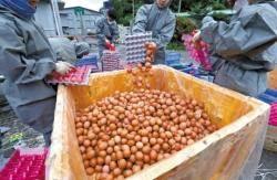 """정부 """"살충제 계란...420개 농장 보완조사"""""""
