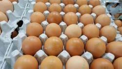 '살충제 계란' 3만여개, 제주서 시중에 이미 풀려…문자·방송자막 등 회수 노력