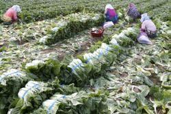 [사진] 수확의 계절