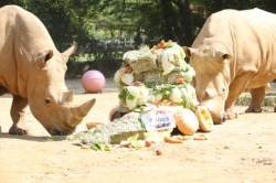 살아남기 위해 '뿔' 잘리는 코뿔소…'코뿔소의 날' 아시나요?