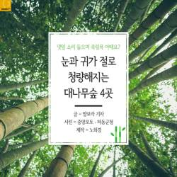 [<!HS>카드뉴스<!HE>]댓잎 소리 들으며 죽림욕 어때요? 대나무숲 4곳