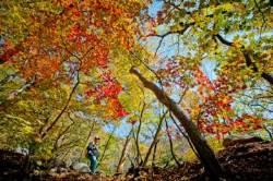 여행 안 가고 뭐해? '한정판' 가을 나들이 야무지게 즐기기