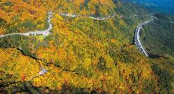 [올림픽 아리바우길 열리다] 숲의 바다를 가르는 세 갈래 길, 여기는 대관령 꼭대기