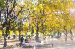 [권혁재 핸드폰사진관] 서울숲 공원에서 만난 또 다른 가을