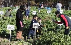 [서소문<!HS>사진관<!HE>] 한해 마무리 수확하는 꼬마농부들
