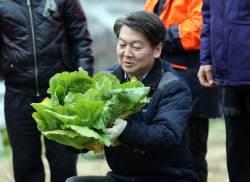 [포토사오정] <!HS>안철수<!HE> 대표가 배추밭서 선보인 '손기술'
