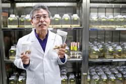 송이버섯 첫 인공재배 성공과 풀어야 할 수수께끼