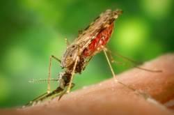 온난화 등에 업은 '슈퍼 말라리아'가 인류를 위협한다