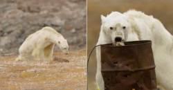 폐기름통 뒤지며 굶어 죽어가는 북극곰