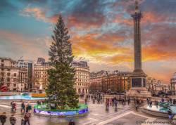 런던 한복판엔 왜 노르웨이 성탄 트리가 70년째 서있을까