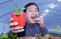 [단독] 네잎 클로버 키워 스타벅스에 … 행운 파는 농부