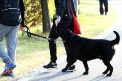 3월부터 '개파라치' 활동 개시…개가 사람 물면 주인 처벌은