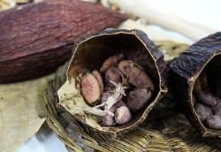 [더,오래] 세계 3대 항암식품 카카오닙스, 맛있게 먹는 법