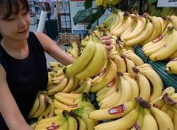 [강찬수의 에코파일] 바나나가 멸종위기에 처한 이유는