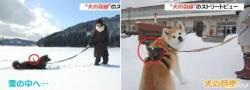 산책하는 개가 보는 세상은?… 구글 스트리트 뷰 공개