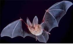 뾰족한 이빨, 혐오 이미지…박쥐는 인류의 적일까 친구일까