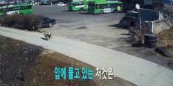 길 위 가방 훔친 범인 알고보니 개…CCTV에 찍힌 모습은