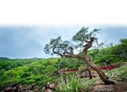 구본무 회장 내일 오전 발인…수목장은 무엇?
