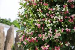 [THIS WEEK] 여름꽃 만개한 베어트리파크
