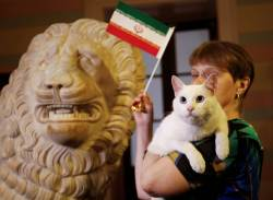 [<!HS>서소문사진관<!HE>]러시아 승리 예측한 고양이 이란 승리도 맞춰! 뒤이어 점쟁이 사자도 등장! 펠레는?