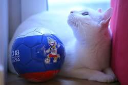 역시 신통하네...'<!HS>월드컵<!HE> 고양이' 아킬레스, 세 경기 모두 적중