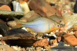 고령엔 뱀장어, 봉화엔 쉬리 … 낙동강 서식 물고기 살펴보니