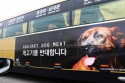 [e글중심]개는 안 되고 소, 돼지만? 반려견은 말고 식용견만?