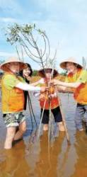 [시선집중] 베트남 맹그로브 숲 복원 … '아시아의 허파'를 되살립니다