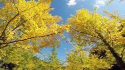 완연한 가을 날씨…나들이객 부른 오대산·설악산 단풍