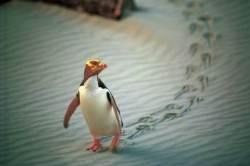 [Travel Gallery] 남반구에 봄이 왔어요! 야생동물 천국, 뉴질랜드
