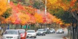 [가을, 대구로 떠나요] 가을 팔공산은 화려한 수채화…단풍길 따라가니 시름 훌훌~