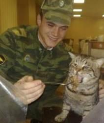 """[전쟁속의 동물들 (2)] """"짬타이거"""" 군대 고양이 """"군묘"""" 계급은?"""