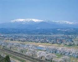 [이주의 할인항공권] 4만원대 일본 벚꽃여행