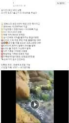부산 '<!HS>지진<!HE> 전조현상' 괴담, 최초 근원지는 도박사이트 홍보팀