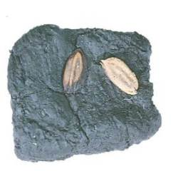 [굿모닝 내셔널]인류 최초 쌀 기원지 기념 조형물이 청주에 들어선 사연은?