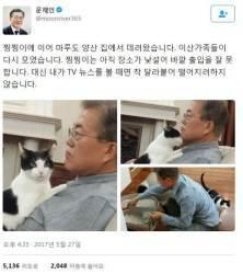 <!HS>청와대<!HE> 입성한 문재인 대통령의 반려견 '마루'…찡찡이 근황은?