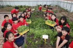 [르포]서울 응암초 학생들 채소 섭취 확 늘어난 이유는