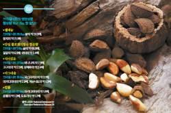 [건강한 가족] <!HS>아마존<!HE> 밀림 나무 열매의 씨, 노화 주범 잡는 셀레늄 듬뿍