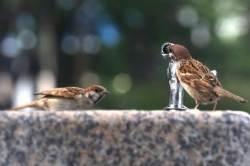 [서소문사진관]참새도 목마르다…오늘도 한여름 무더위