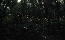 제주 가면 놓치지 말자… 별 흐르는 숲, 여름밤 반딧불이