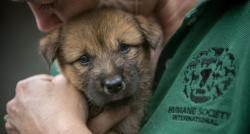 국제동물보호단체, 복날 앞두고 국내 개농장서 149마리 구출