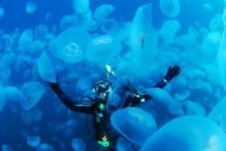 [더,오래] 박동훈의 노인과 바다(2) 10m 바다 속서 만난 해파리떼 황홀경