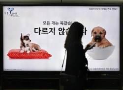 [서소문 사진관] 복날 그리고 보신탕