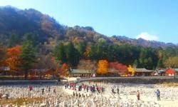 백담구곡 단풍, 가을을 물들이다