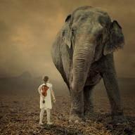 사드 배치, 코끼리는 생각하지 마!