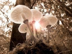 생명미학과 삶 이야기17: 생명의 다양성과 단일성 그 오묘한 섭리