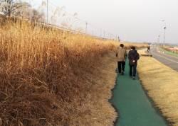 구리시, 왕숙천 상류 둔치 갈대밭 잔디광장으로 재조성