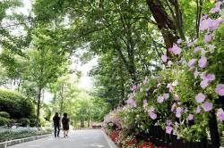 [주말 가볼만한곳] 꽃길 걷다 맛길로 빠지다…눈호강·입호강 명소 3選