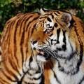 """""""난 사람은 안 잡아먹어""""호랑이의 짐승과 사람 판별법"""